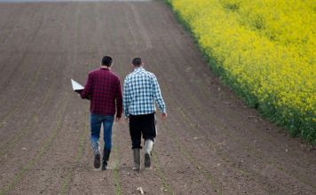 Before Correction, 70% Of Yield Farmers Planned to Stay In The Field - Survey
